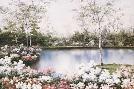 Diane Romanello White Birches