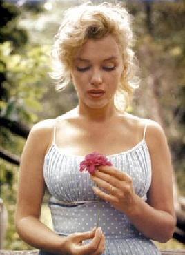 Sam Shaw Marilyn Monroe, Flower