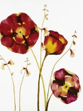 Julia Ogden Poppies
