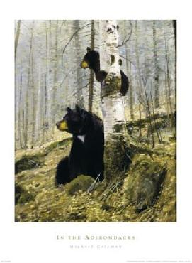 Michael Coleman In The Adirondacks Canvas