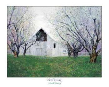 Ned Young Orchard Blossoms Canvas