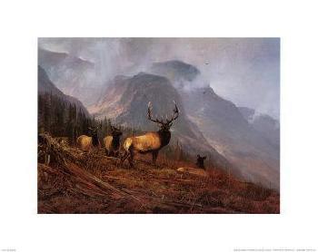 Michael Coleman Bookcliffs Elk I Canvas
