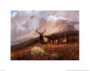 Michael Coleman Bookcliffs Elk II Canvas
