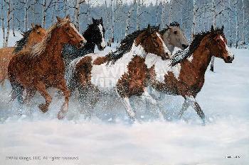 Chris Cummings Winter Run - Horses Canvas