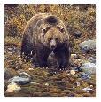 Brenders Trailblazer  -  Grizzly Bear (detail)