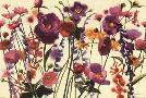 Shirley Novak Couleur Printemps I