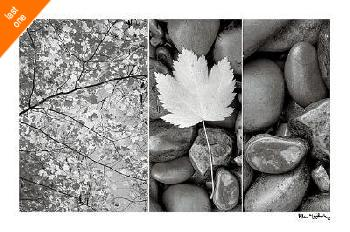 Alan Majchrowicz Nature Trio Canvas LAST ONES IN INVENTORY!!