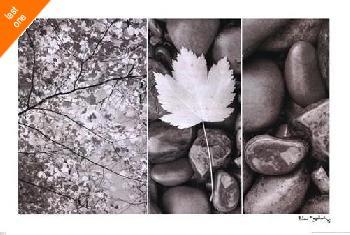 Alan Majchrowicz Nature Trio   LAST ONES IN INVENTORY!!