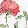 Brissonnet Blossom Sketches IV Color