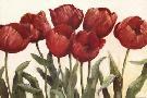 Carol Rowan Ruby Tulips