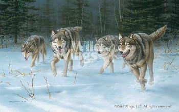 Jim Hautman On the Move - Wolves