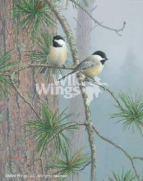 Jim Hautman Red Pine and Chickadees