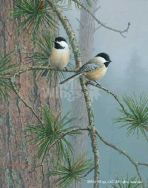 Jim Hautman Red Pine and Chickadees Remarque on Paper