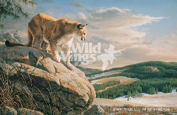 Jim Hautman Vantage Point - Cougar