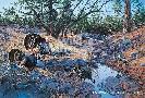 Jim Kasper Western Ritual - Merriam Turkeys