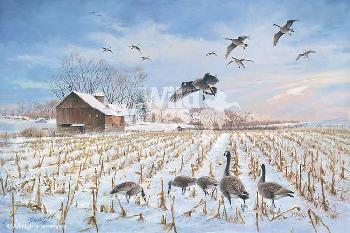James Killen Gathering - Canada Geese
