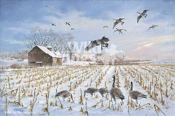 James Killen Gathering - Canada Geese Remarque on Paper