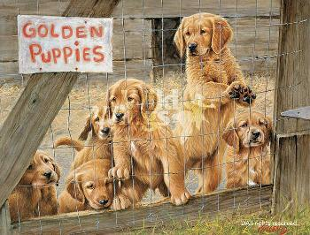 James Killen Golden Daze - Golden Retriever Puppies Remarque on Paper