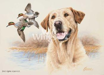 James Killen In the Marsh - Yellow Lab Remarque on Paper