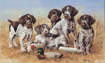 James Killen Great Hunting Puppies - Drahthaars Remarque on Paper