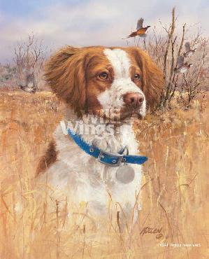 James Killen Top Dog - Brittany Signed Open Edition on Paper