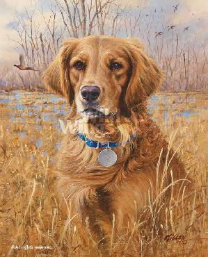 James Killen Top Dog - Golden Retriever Signed Open Edition on Paper