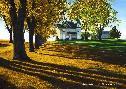 Steven Kozar Autumn Leaves