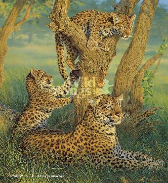 Lee Kromschroeder Family Outing - Leopards Artist