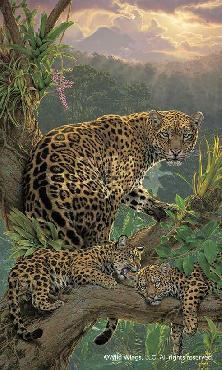 Lee Kromschroeder Family Tree - Jaguars