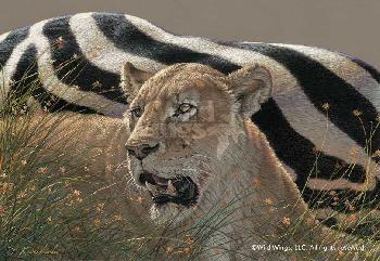 Lee Kromschroeder Ngorongoro Morning - Lioness Canvas
