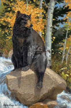 Lee Kromschroeder Paws That Refreshes - Black Bear