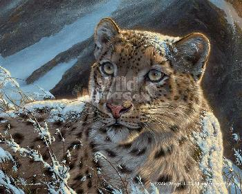 Lee Kromschroeder Snow on Snow - Snow Leopard Canvas