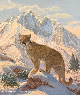 Lee Kromschroeder Spirit of the West - Cougar Canvas