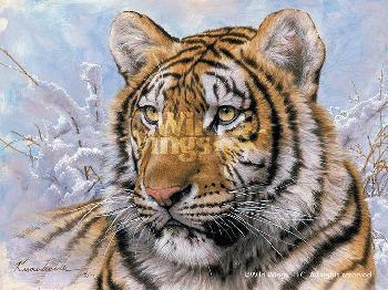 Lee Kromschroeder Spots and Stripes - Siberian Tiger Signed Open Edition on Paper