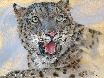 Lee Kromschroeder Spots and Stripes - Snow Leopard Signed Open Edition on Paper