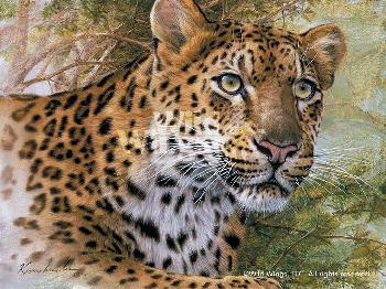 Lee Kromschroeder Spots and Stripes - Leopard Signed Open Edition on Paper