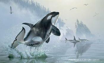 Lee Kromschroeder Teeming Waters - Orcas