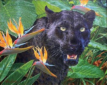 Lee Kromschroeder Trouble in Paradise - Black Leopard Canvas