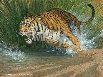 Lee Kromschroeder Unleashed - Tiger Canvas