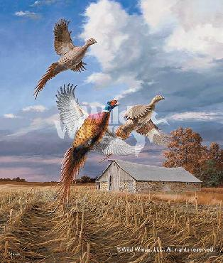 David Maass Autumn Brilliance - Pheasants Artist