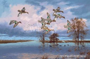 David Maass Arkansas Reverie Canvas