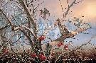 David Maass Autumn Orchard - Ruffed Grouse