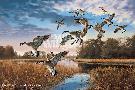 David Maass Daybreak Descent - Canada Geese