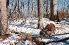David Maass Early Spring - Turkeys