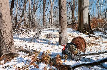 David Maass Early Spring - Turkeys Artist