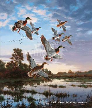 David Maass Evening Flight - Mallards