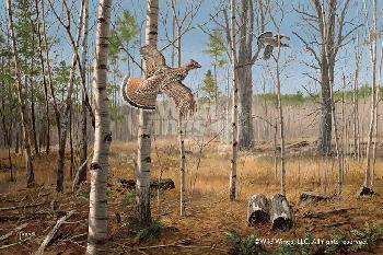 David Maass Grouse Meadow - Ruffed Grouse