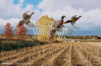 David Maass Hasty Ascent - Pheasants Artist