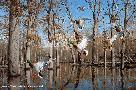 David Maass Heart of the Timber - Mallards