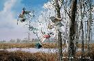David Maass Home Again - Wood Ducks
